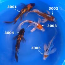 Koi Tubs Sku# 3001 to 3005